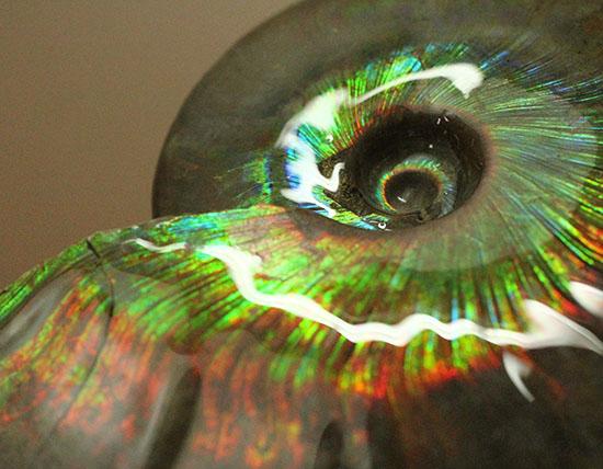発色、色の種類、サイズ、フォルム、すべてにおいてハイレベル!マダガスカル産光るアンモナイト/中生代白亜紀(1億3500万 -- 6500万年前)【an1151】
