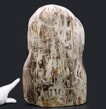 縦40センチ弱、重量16キログラム超えの巨大な珪化木(Petrified wood)。インドネシア産