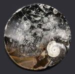 底が深いタイプ、小物入れにいかが?古生代デボン紀の地層より採集されたゴニアタイト(Goniatite)を含む石を加工した皿
