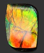 青から赤まで様々な色を呈する美しいカナダ産のアンモライト(Ammolite)を使ったピンブローチ。プラセンチセラス科のアンモナイトの殻の化石