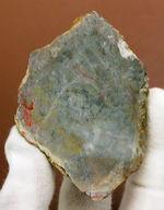 恐竜の糞(うんち)が化石になった鉱物、コプロライト(Coprolite)