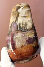 珍しい全面ポリッシュ標本が登場!2億4800万年前の木化石、マダガスカル産珪化木(ケイカボク)