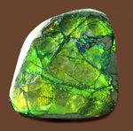 美しい緑が特徴のアンモライトピース(Ammolite)。ファーストコレクションにいかがでしょう。