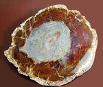 高級感の塊。2.5億年前の針葉樹の珪化木。同心円状に広がる模様。最大部7cmを超える厚み。完成されたコレクション品です。