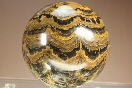 まるで、ミニ地球!?レーシーな模様と幾何学模様が融合した、ストロマトライト化石(大玉) 化石 販売化石販売の化石セブン ティラノサウルスの歯化石はこちら