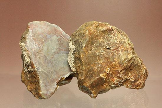 ウンチ化石コプロライト