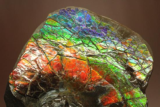 アンモライト(Ammolite)