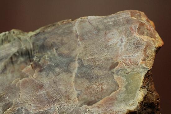 コプロライト(恐竜のウンチ化石)