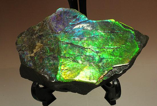 アンモライトのピース標本(Ammolite)