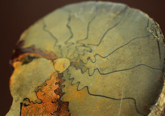 ユニークな隔壁模様が特徴の、ヘマタイトアンモナイトペア化石(Ammonite)