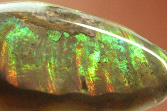 この品に限りリーズナブル価格!アンモナイトペンダントトップ(Ammonite)
