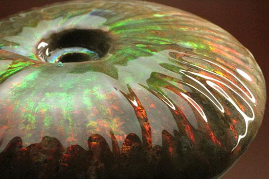 500gオーバー!大きなグリーンの光の玉現る、マダガスカル産アンモナイト(Ammonite)