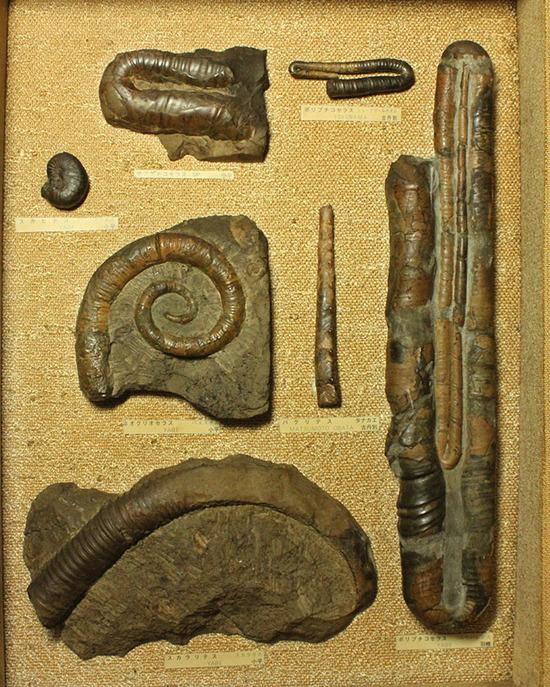 二本木コレクションの中心的存在、宝物を詰め込んだような額装標本をついに発表。