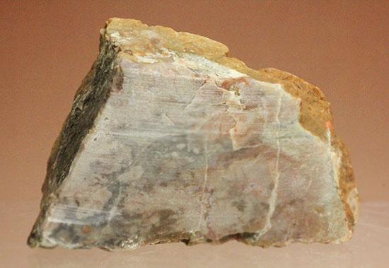 手の平に載せるとズッシリ!恐竜のウンチ化石、コプロライト