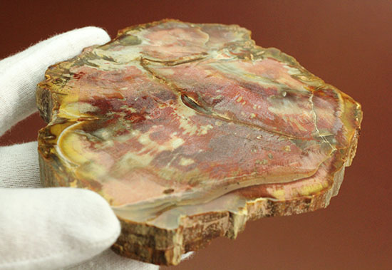 マダガスカル産の珪化木