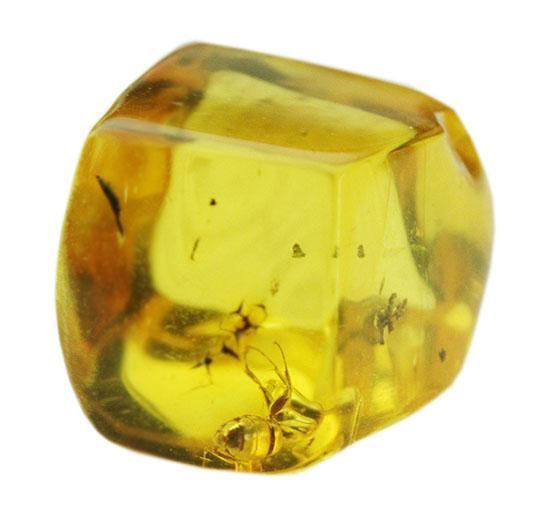 キューブ型!蟻(アリ)が内包された、約4000万年前のバルト海産琥珀(Amber)/新生代(6500万年前 -- 現在)【ot843】