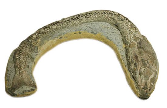 ヴィンクティフェルと思しき、ブラジル・サンタナフォーメーション産の立派な古代魚の化石。うなぎのようなカーブが面白い。/中生代白亜紀(1億3500万 -- 6500万年前)【ot847】