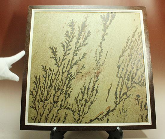 自然が生み出したマスターピース、石灰岩のキャンバスに自然が描いたデンドライト/ 【ot848】