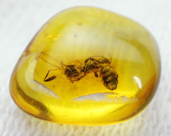 この小さな琥珀に、とてつもないロマンが詰まっています!おおよそ30myaのアリが内包!バルト海産虫入り琥珀(Amber)/新生代(6500万年前 -- 現在)【ot859】