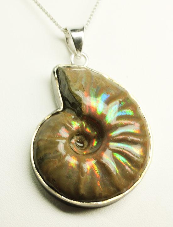 宝石のような美しいイリデッセンス(iridescence)アンモナイトを使用したペンダント(高級ジュエリーケース付)/中生代白亜紀(1億3500万 -- 6500万年前)【an1057】