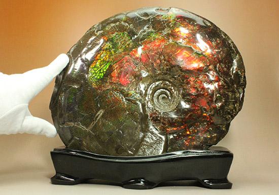 竜のウロコを楽しめる、アンモライト完全体。オレンジ色の発色に注目。/中生代白亜紀(1億3500万 -- 6500万年前)【al161】