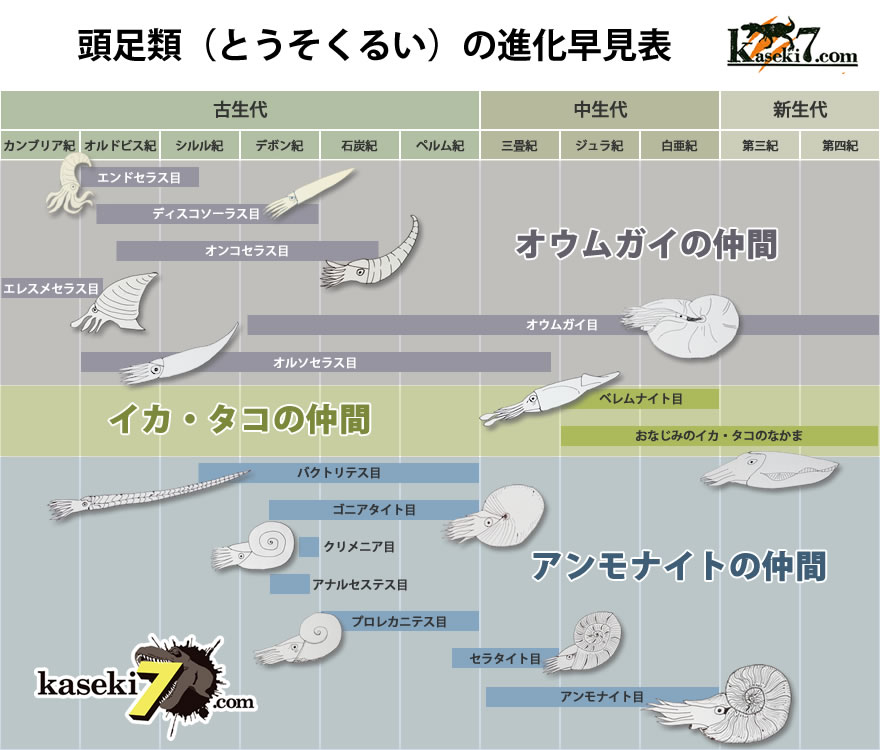 頭足類の進化早見表