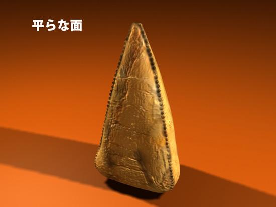 ティラノサウルス科に特徴的な歯の形