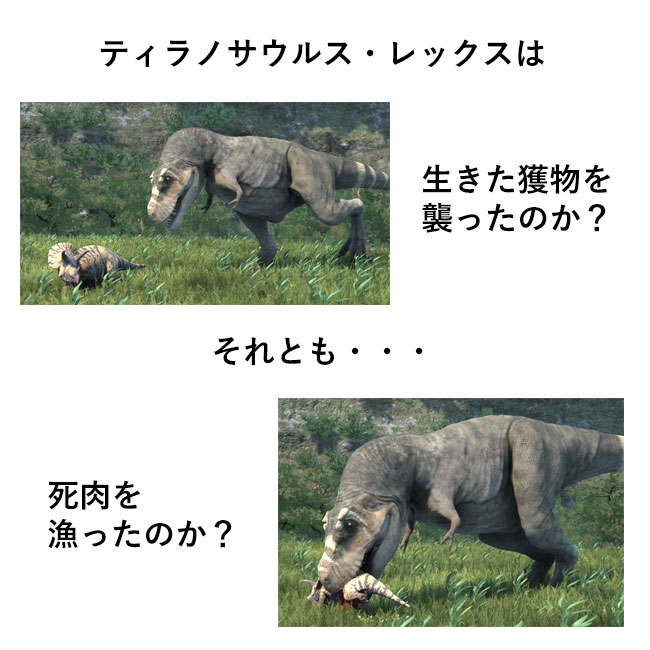 ティラノサウルスはスカベンジャーだったのか?ハンターだったのか?