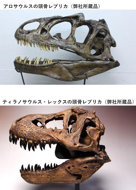 ティラノサウルスとアロサウルスの頭骨の厚みの違いを示す比較写真