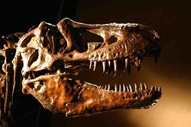 ティラノサウルスの鋭い歯列