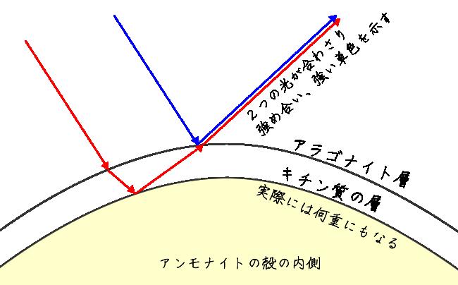 アンモナイトの殻におけるイリデッセンス