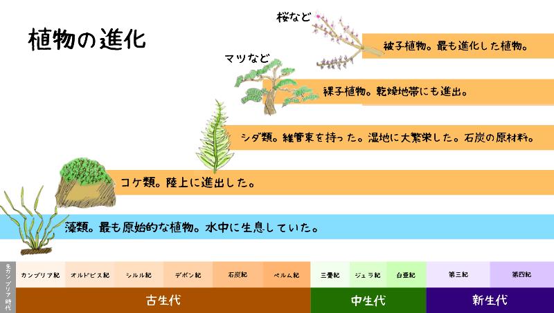 10分で分かる植物の進化