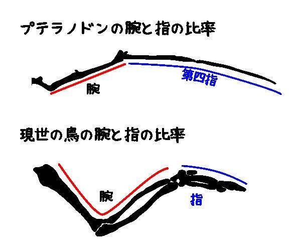 プテラノドンと現世の鳥の腕の骨格の比較